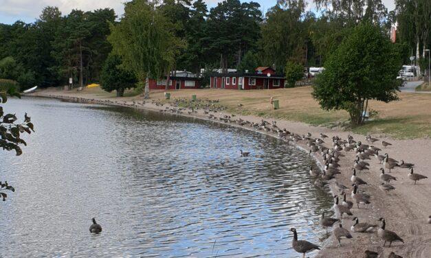 Nystart vill se en bättre utveckling i Bredsand